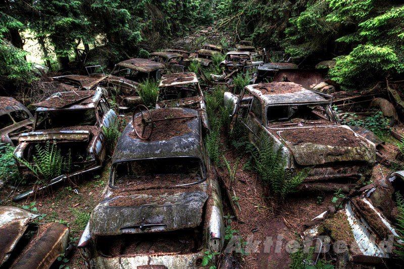Concei opbonline floresta esconde 500 carros deixados por soldados dos eua ap s a segunda guerra - Hek begroeide ...