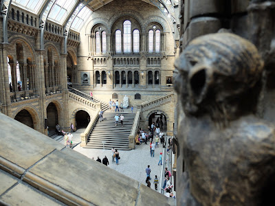 Photographs of the Central Hall of the British Natural History Museum: Monkeys, Beams, and Arches