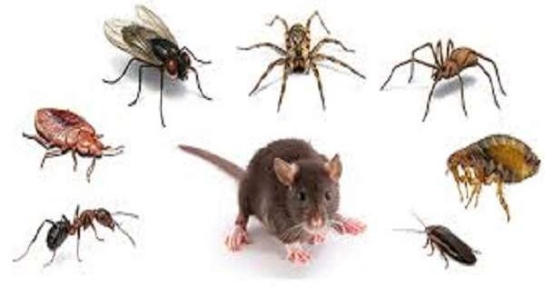 Clean Your Home from Different Pests! These Natural Homemade Products Help Against: Cockroaches, Ants, Flies…