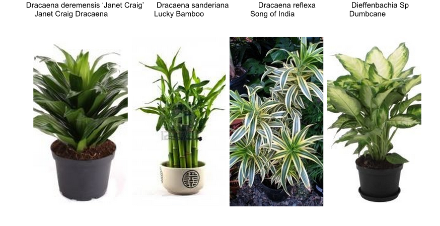 Interiorscaping compendium indoor plant identification - Names of indoor plants ...