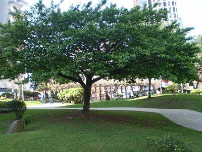 Árvores, praças e parques