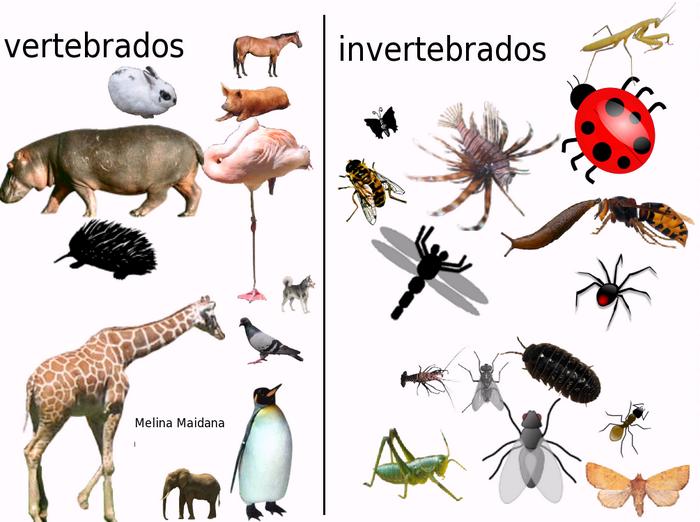 Clasificación de animales vertebrados e invertebrados