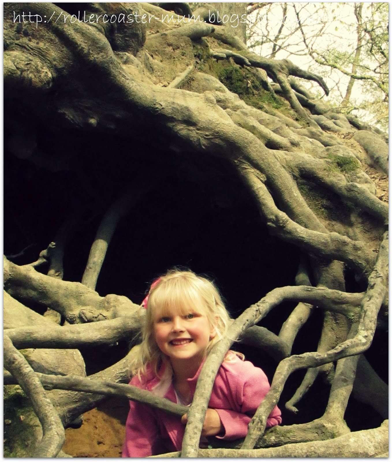 caves made from tree roots at National Trust Waggoners Wells