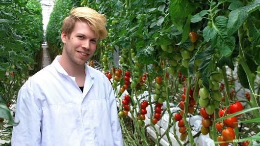 Björn von Herzfutter im Tomatengewächshaus