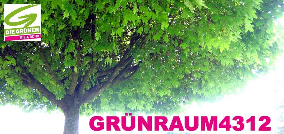 GrünRaum4312- GRÜNE RIED IN DER RIEDMARK