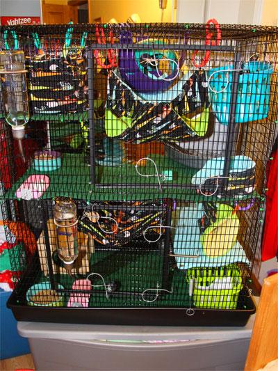 Ratropolis Rat Cage Accessories