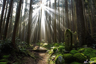 Unique Japan Tours Kumano Kodo Hiking Forest Beautiful