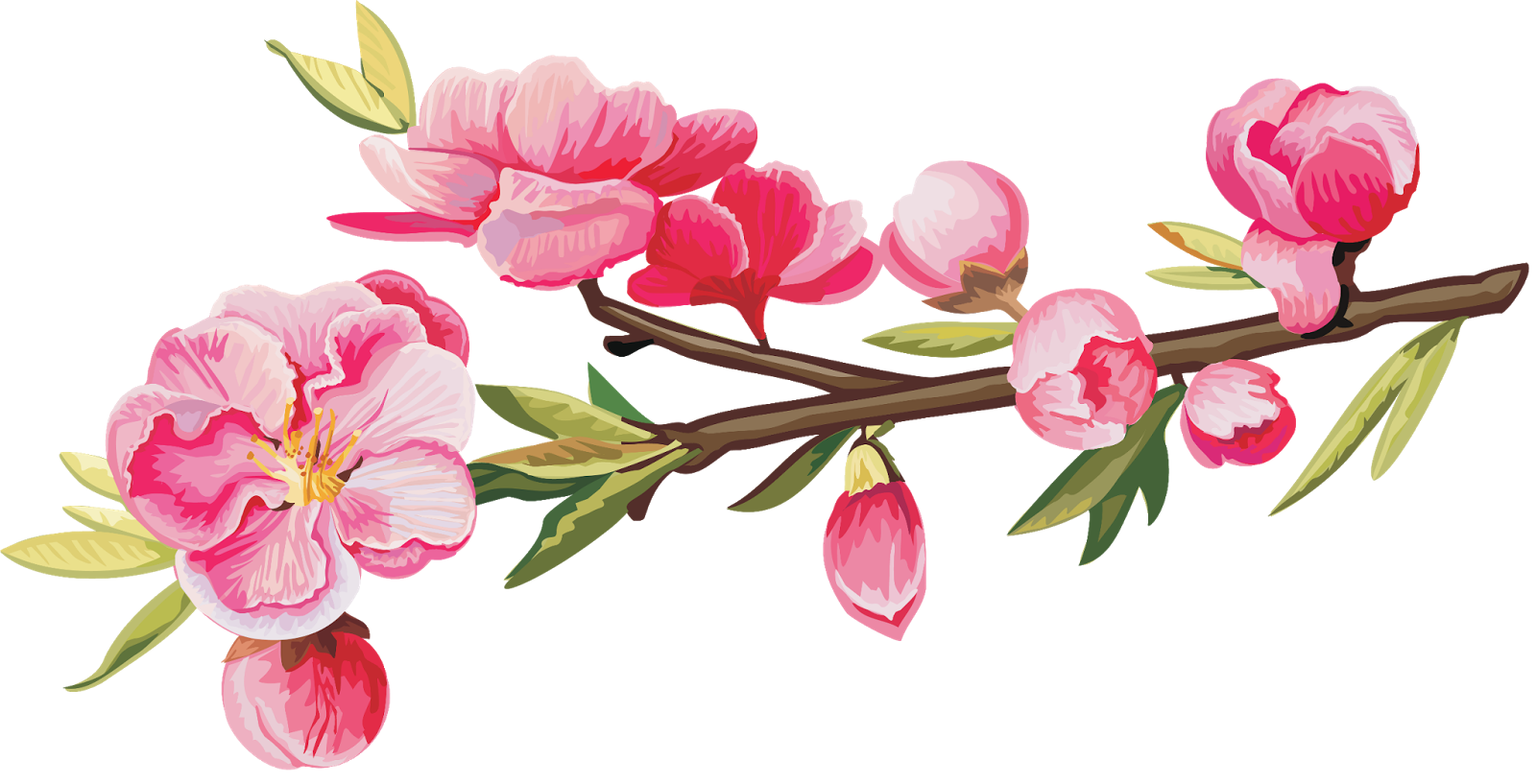 Photorenders: Fleurs Rose Nature Branche - png Ветка Калины Png