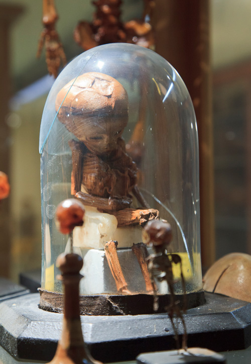 Morbid Anatomy: Museo di Anatomia Umana (Museum of Human Anatomy ...