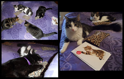 Anakin, George, Zoe, Trixie, & Pixie Christmas presents