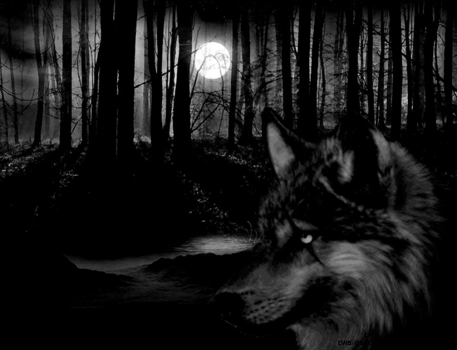 Wolves Forests and Dark wallpaper on Pinterest