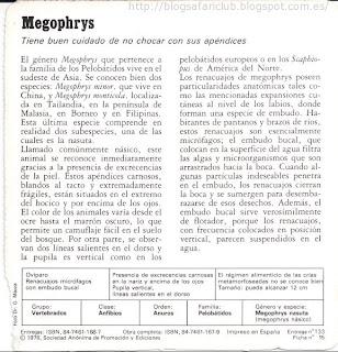 Blog Safari Club, características del Megophrys