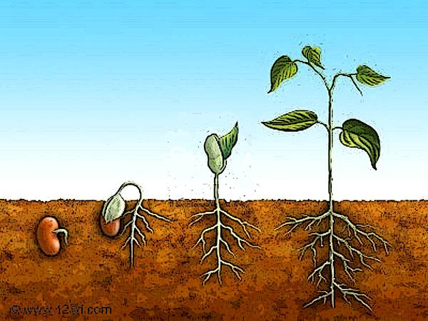 No todo es lo que parece sembrar tu ma ana no es lo mismo for Plantar hortensias semillas