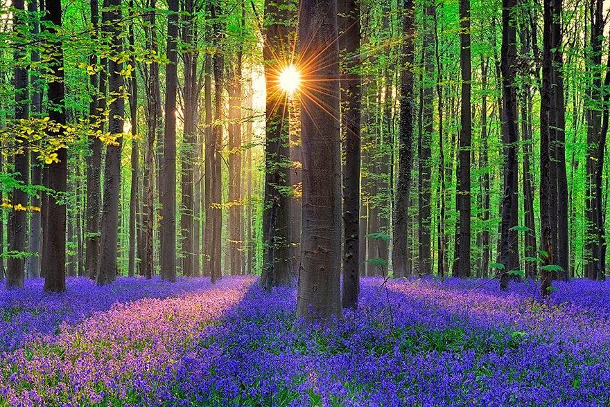 bosque hallerbos