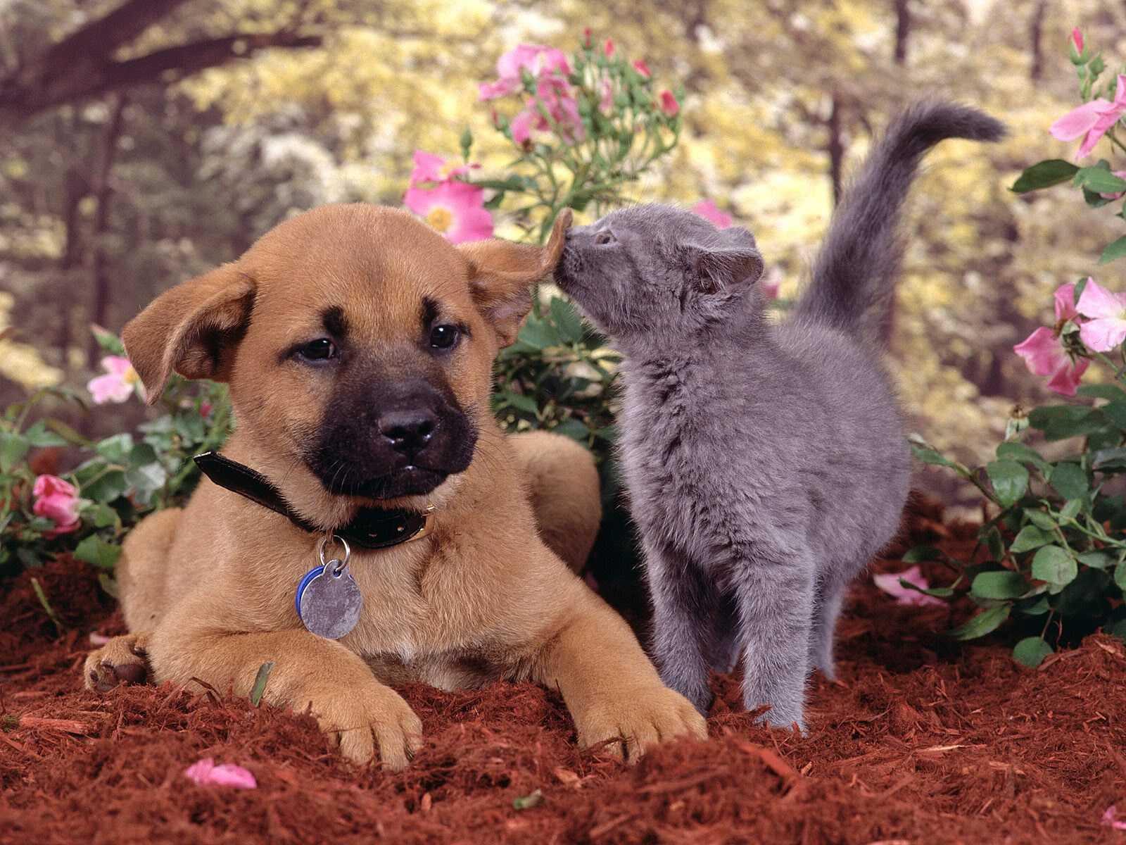 ZOOM DISEÑO Y FOTOGRAFIA: gatitos,gatos,tiernos,mascotas ...