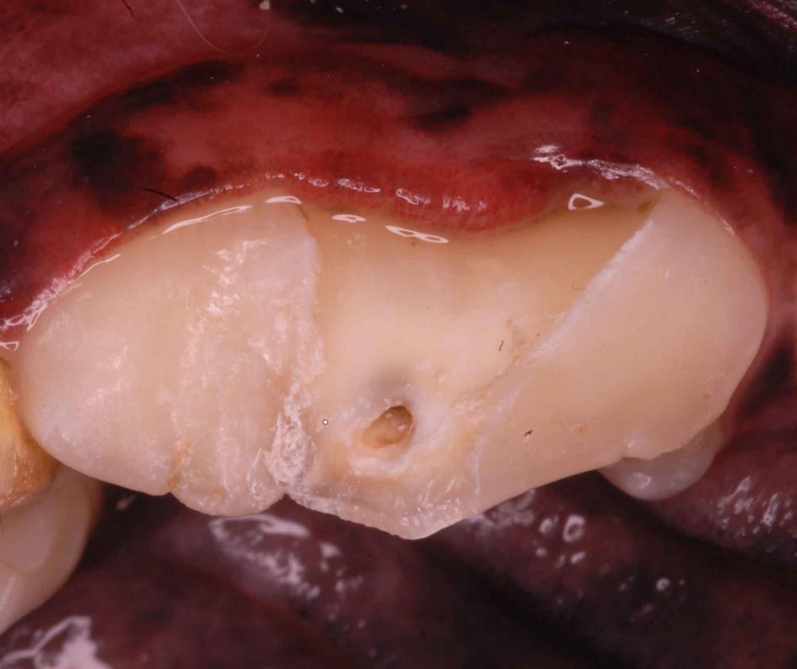 Can Antlers Break Dogs Teeth