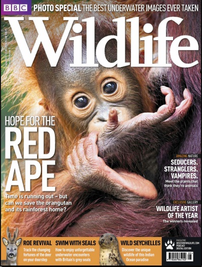 BBC Wildlife Red Ape Cover