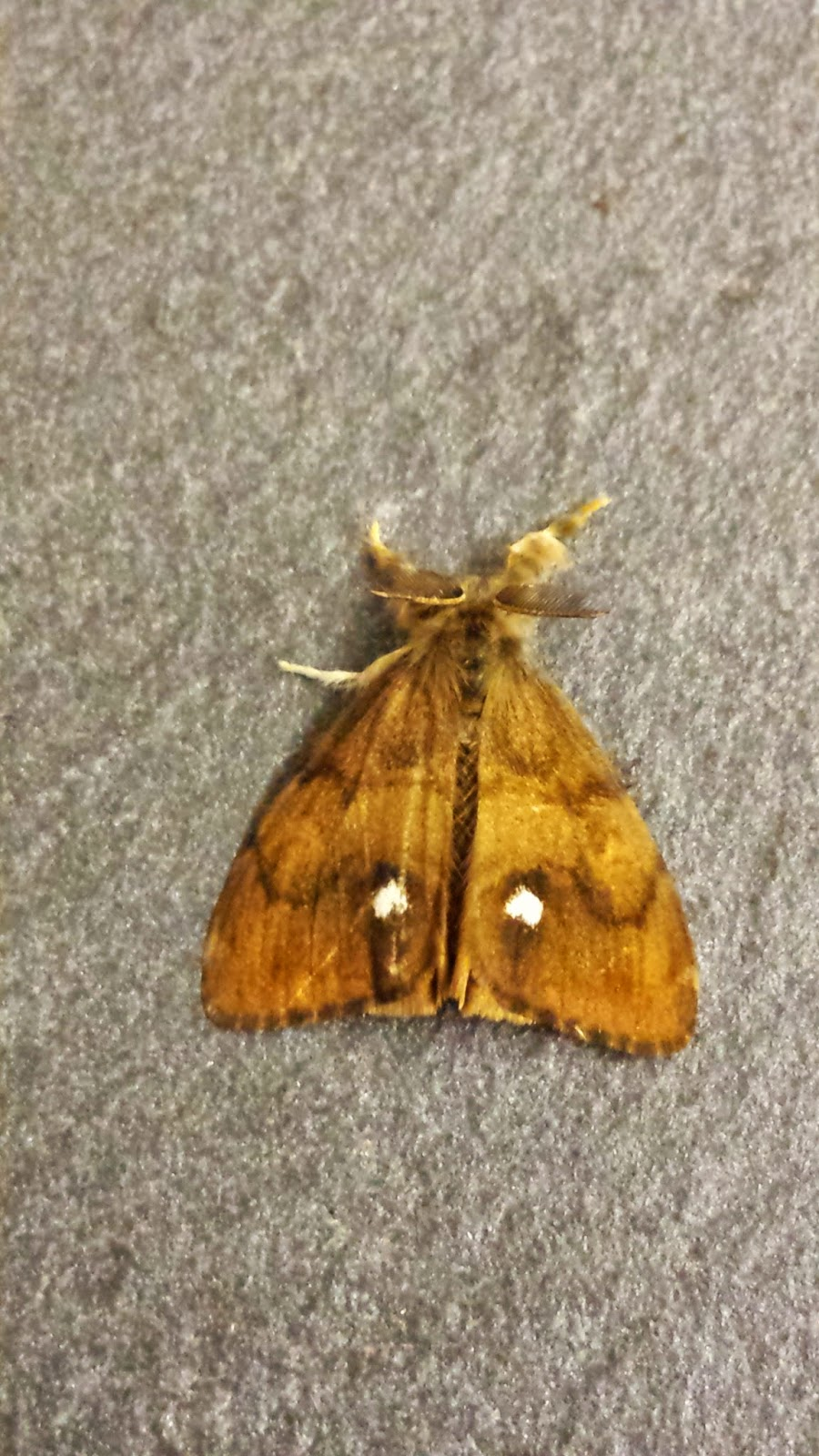 Monmouthshire Moth and Butterfly Group : July 2014