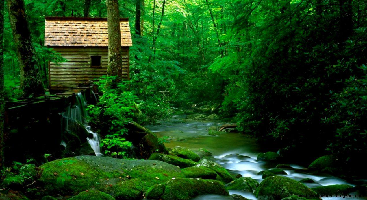 beautiful natural scene wallpaper hd desktop best hd