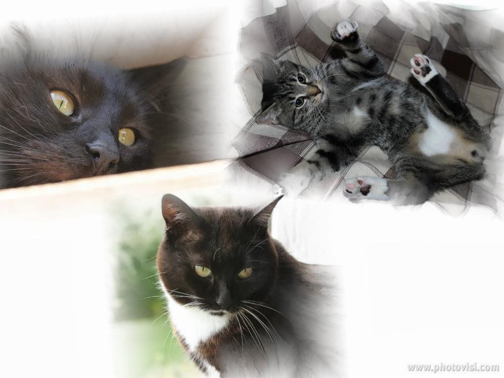 Mitzi , Schatzi & Baloo