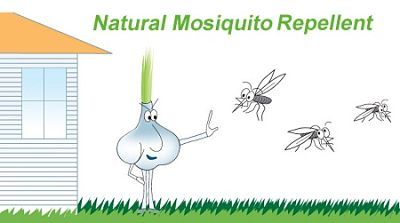 How to naturally repel mosquitoes using Garlic?