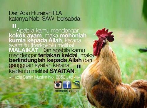 Sebab Ayam Berkokok