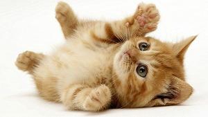 Kucing Menggemaskan