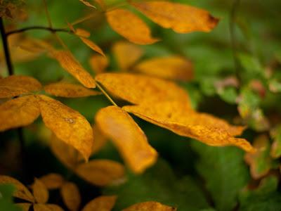 Autumn Season Standard Resolution Wallpaper 26