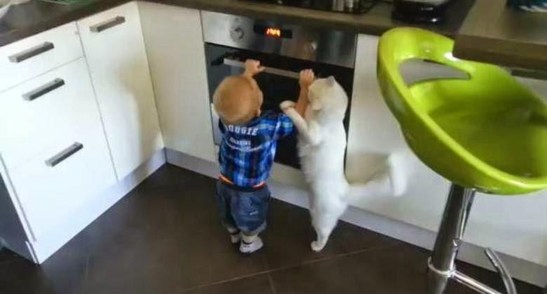 Kucing ini Melindungi Balita Agar Tidak Dekati Oven, Lihat Aksi Lucunya