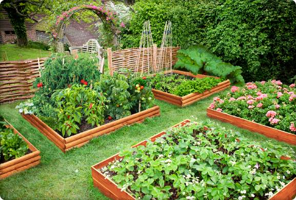 Growing your own food... container garden | Oh Sweet Serenity