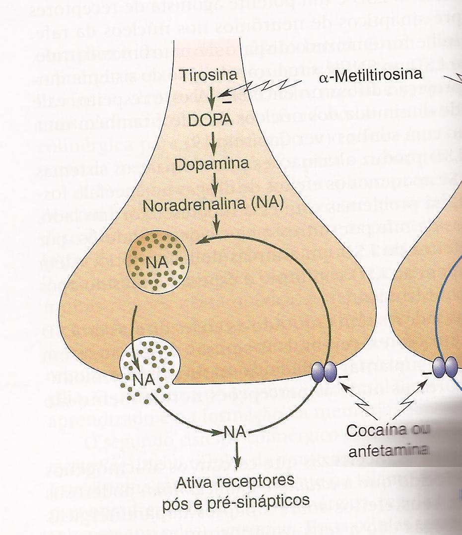holoperidol