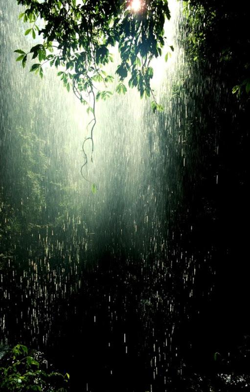 The Rainforest  Class BBs Blog