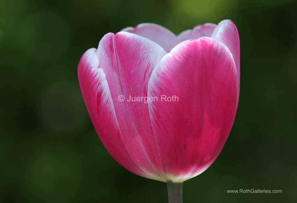 http://juergen-roth.artistwebsites.com/art/all/all/all/flowers?page=4
