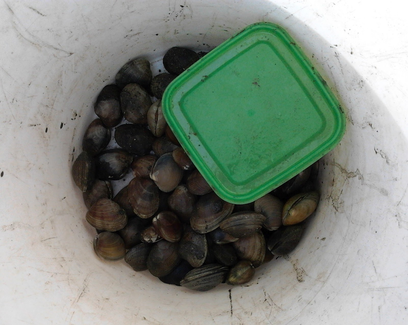 how to keep clams alive in salt water