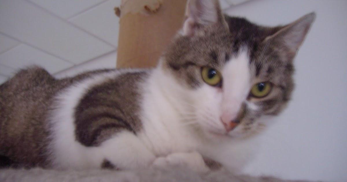 Tierpsychologie Vierpfotenprofis Die Katze Pinkelt Im Stehen