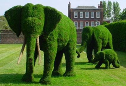 Plantas e jardins plantas flores e jardinagem poda for Imagenes de arboles ornamentales