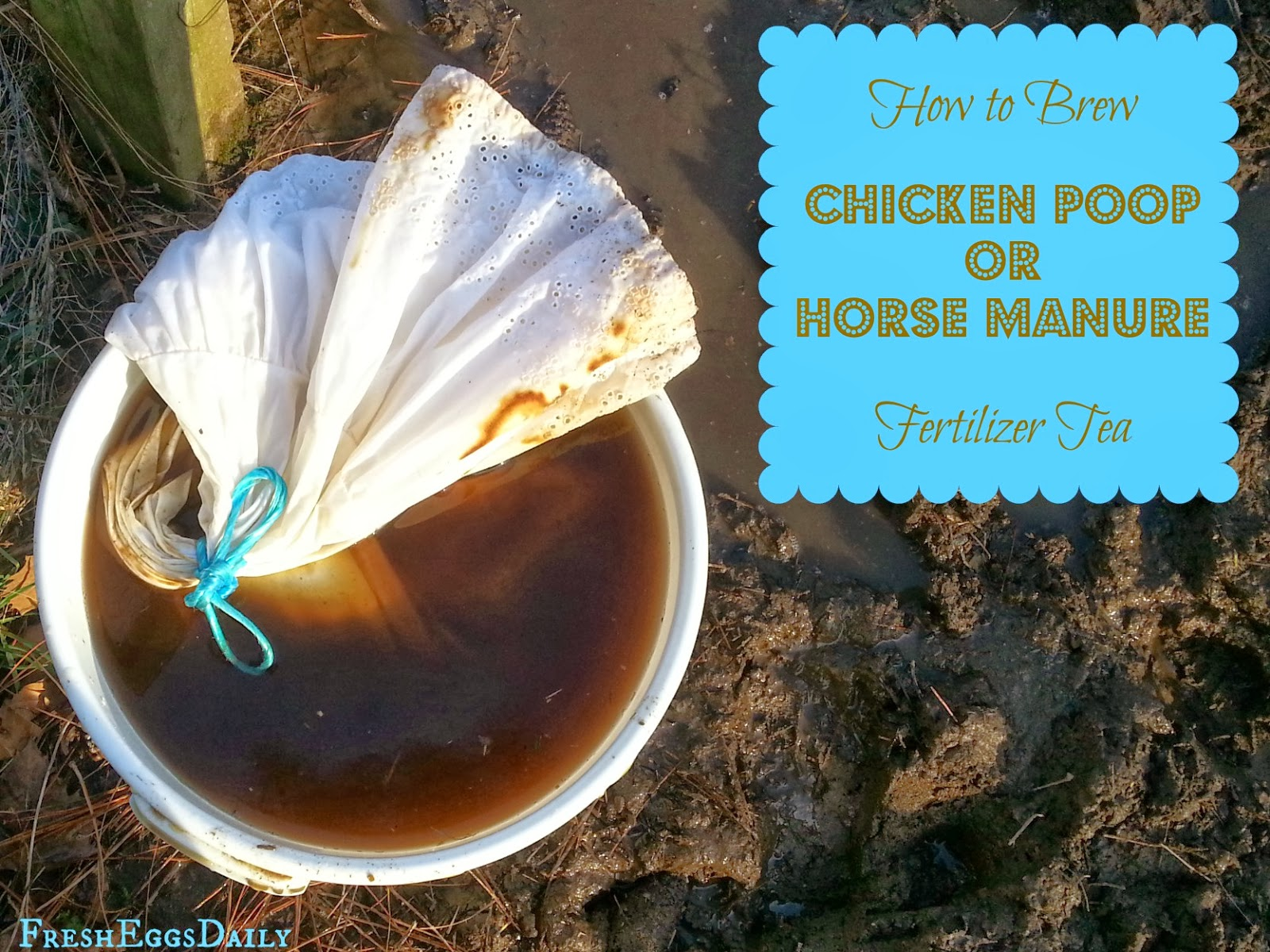 How To Brew Chicken Poop Or Horse Manure Fertilizer Tea For Your
