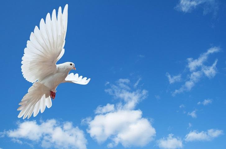 Favoloso Le muse di Kika: Bianche colombe di pace [moda+fotografia] JH42