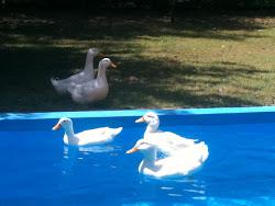 ¿Mirá quién vino a nadar conmigo?!