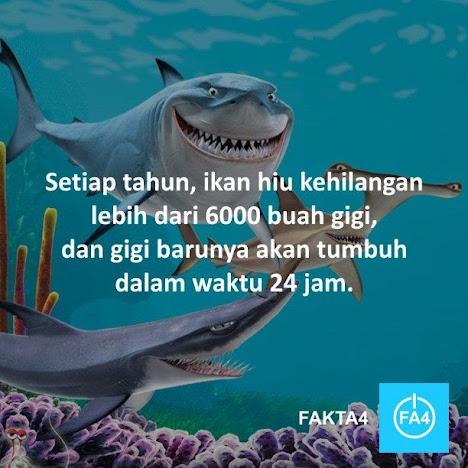 Gigi Ikan Hiu