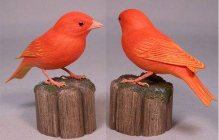 Kenari Lokal Variasi Sangkar Burung Kenari
