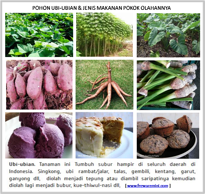 Gambar Jenis Tumbuhan Tanaman Makanan Pokok Freewaremini