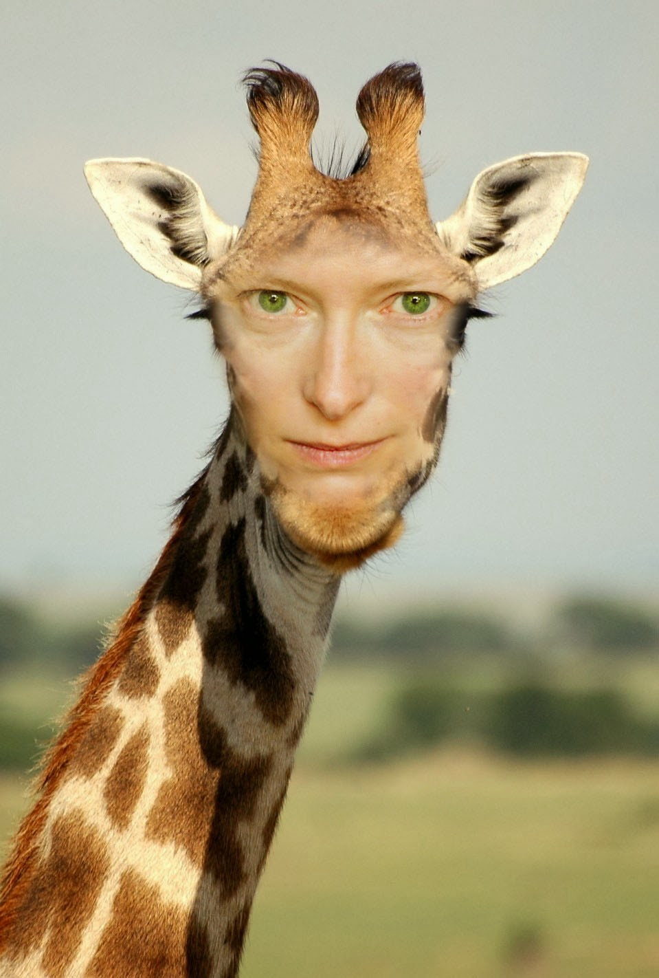 tilda-swinton-animal, tilda-swinton-long-neck, ossicones, giraffe, human-giraffe