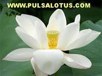 Lotus Reload Pulsa Elektrik Terlengkap, Voucher Game dan Token PLN