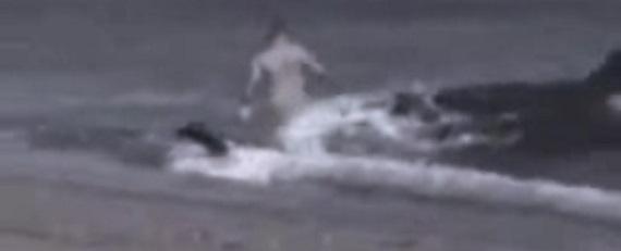 Homem sendo atacado por baleia na beira praia