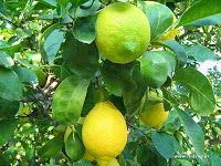 Χυμός λεμονιού