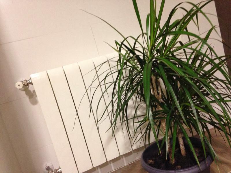 Crea tu jard n los problemas de las plantas de interior - Plantas de interior nombres ...