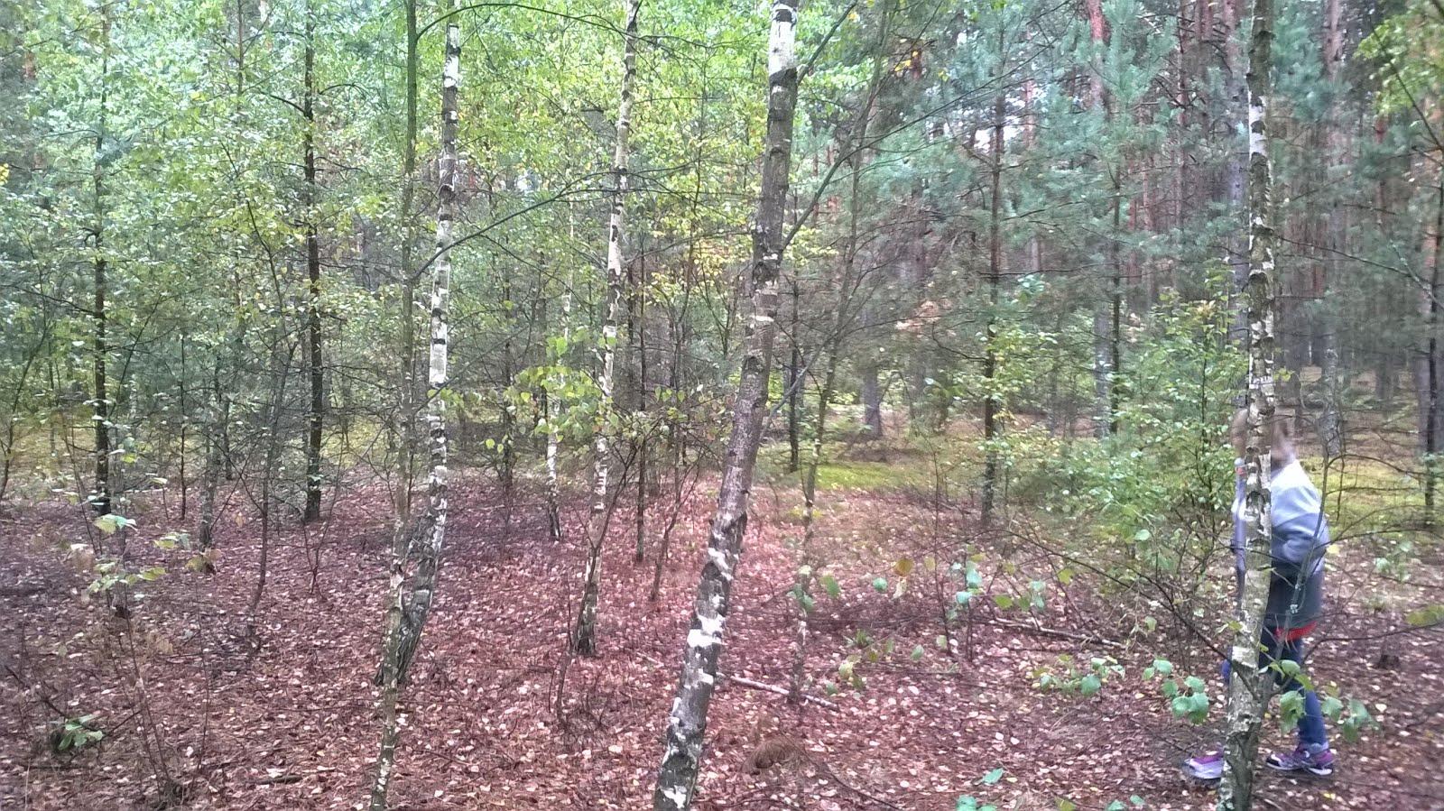 Jesień w naszym lesie
