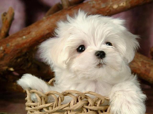 Cute white kitten sitting in a basket