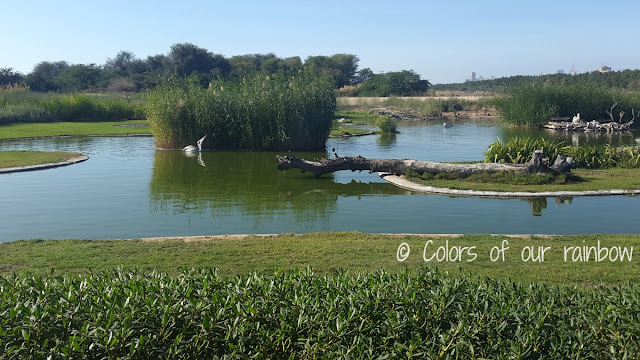 WASIT WETLAND CENTRE SHARJAH (UAE) - An amazing winter break trip for kids.@http://colorsofourrainbow.blogspot.ae/